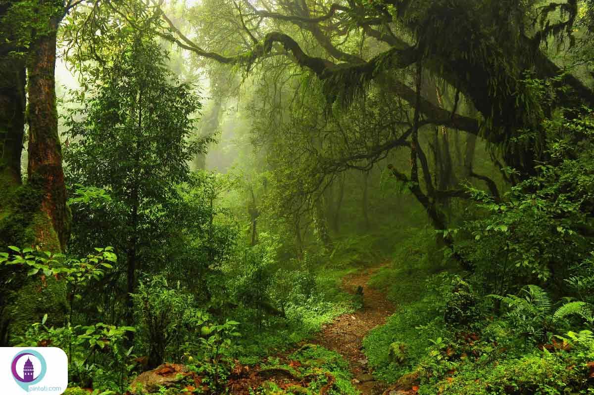 سفر به اعماق جنگل