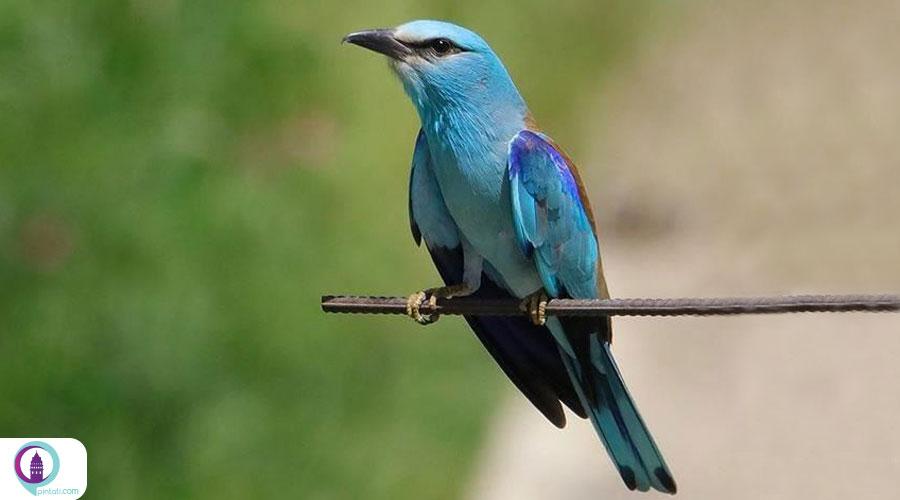 پرندگام مهاجر