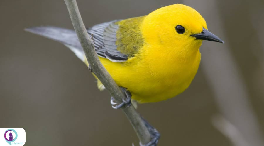 گونه های پرندگان ترکی