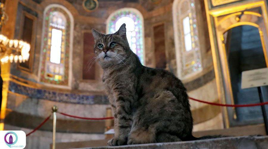 مرگ گربه مشهور ایاصوفیه و تسلیت استاندار استانبول