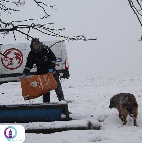 رسیدگی به حیوانات در روزهای برفی