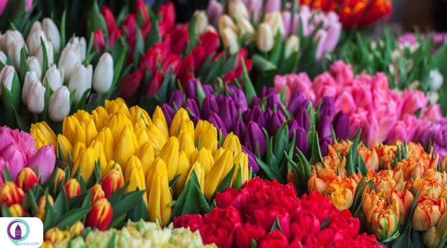 افزایش صادرات گل در ترکیه