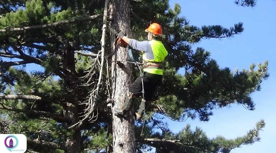 حفاظت از درختان در ترکیه