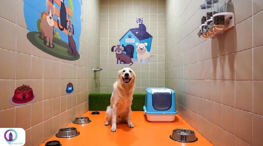راهاندازی اتاق ویژه حیوانات خانگی در فرودگاه استانبول