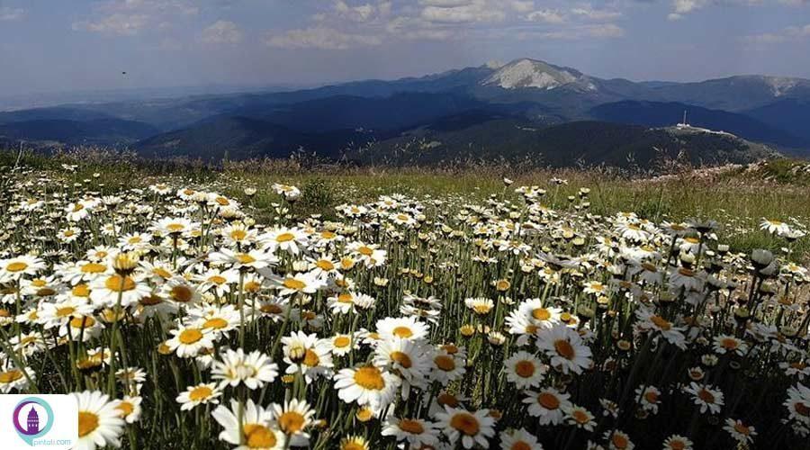کوه ایلگاز و زیبایی بی نظیر آن در چهار فصل سال